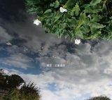 近藤達郎『青空 | Azure』